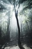 Magical sun rays in surreal forest with fog. In the morning. Enchanted magical forest with fog and sun rays stock images