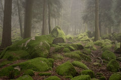 Magical sunny and foggy mountain woods Royalty Free Stock Photos