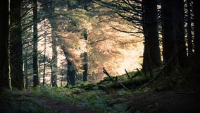 Magical Sunrise In The Forest. Morning sunlight breaks through trees in enchanted forest