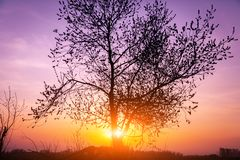 Magical sunrise with tree. Beautiful landscape image with trees silhouette at sunset royalty free stock image