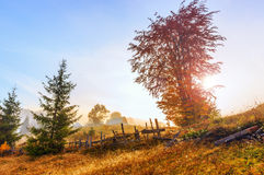Magical sunrise with tree Stock Image
