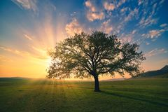 Magical sunrise with warm sun rays, green meadow and big tree.  royalty free stock photography