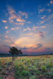 Magical sunset in Africa with a lone tree on a hill and louds Royalty Free Stock Images
