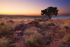 Magical sunset in Africa with a lone tree on hill and no clouds Royalty Free Stock Photos