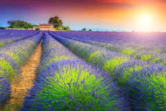 Magical sunset and lavender fields in Provence region, Valensole, France Royalty Free Stock Photos
