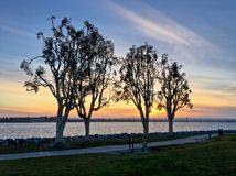 Magical sunset with silhouetted trees along waterfront urban Royalty Free Stock Photography