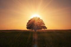 Soluppgång bak tree Royaltyfria Foton