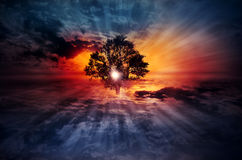 Magical surreal Tree on Cloudscape. Magical tree in dramatic cloudy blue sky at sunset sunrise in which sun looking through the tree beances and spreading royalty free stock photos