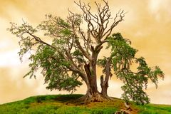Magical Tree Royalty Free Stock Images