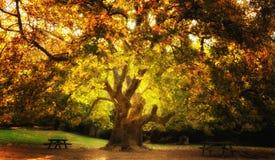 magical tree royaltyfri foto