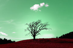 Magical tree. Abstract colours, unique scenery, beautiful landscape stock photos