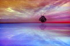 Magical tree abstract landscape with dramatic sky Royalty Free Stock Photo