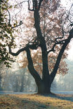The magical tree in autunm morning light Stock Photos