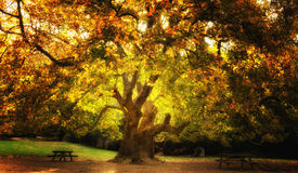 Magical Tree. Colorful magical tree in a mountain in Athens, Greece Royalty Free Stock Photo
