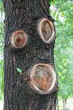 A magical tree with a face. Elf, goblin, woodman. Forest fairy tale stock image