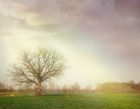 Magical tree Stock Image