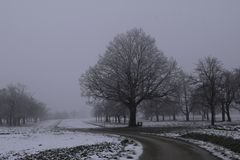 Magical Tree. Fog and frost is giving a magical look to the tree royalty free stock photography