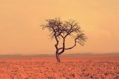Magical tree in a village Royalty Free Stock Photography