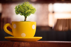 Magical tree in yellow cup at library - Abstract. Magical tree in yellow cup on wooden table at library - Abstract royalty free stock photo