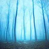 Magical turquoise color foggy forest scene Stock Photos
