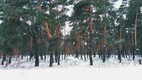 magical winter forest Royalty Free Stock Photo