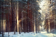 Magical winter forest a fairy Stock Photos
