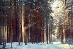 Magical winter forest a fairy Stock Photos