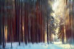 Magical winter forest, a fairy tale, Royalty Free Stock Images
