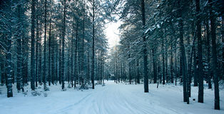 Magical winter forest, a fairy tale, Royalty Free Stock Photos