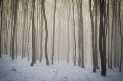 Magical winter forest Royalty Free Stock Photography