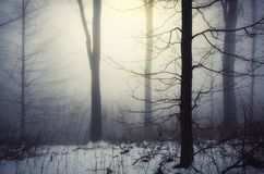 Magical winter forest with light shining through fog. Magical winter forest with snow and light shining through the morning fog royalty free stock images