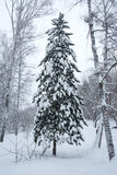 Magical winter forest Stock Photography