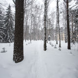 Magical winter forest Stock Images
