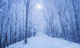 Magical winter forest road Stock Photos
