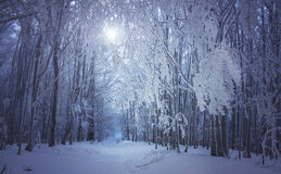 Magical winter forest road Royalty Free Stock Photos