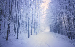 Magical winter forest road Stock Images