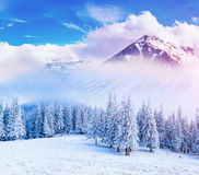 Magical winter landscape Royalty Free Stock Images