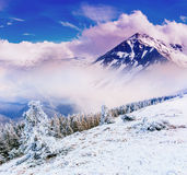 Magical winter landscape Royalty Free Stock Photo