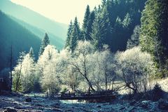 Magical winter landscape with trees in frost. vintage effect Stock Photos
