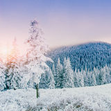 Magical winter snow covered tree Stock Images