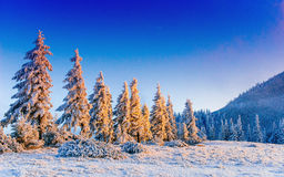 Magical winter snow covered tree Stock Image