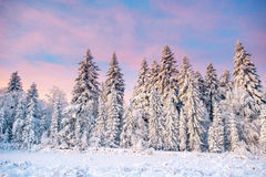 Magical winter snow covered tree Royalty Free Stock Photo
