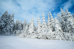 Magical winter snow covered tree Stock Photography