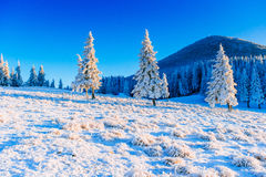 Magical winter snow covered tree Royalty Free Stock Photography
