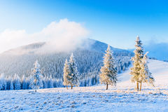 Magical winter snow covered tree.  royalty free stock photos