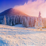Magical winter snow covered tree.  stock photos