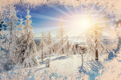 Magical winter snow covered tree, background with some soft high. Lights and snow flakes Royalty Free Stock Photos