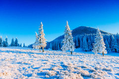 Magical winter snow covered tree. Carpathian. Europe royalty free stock photos