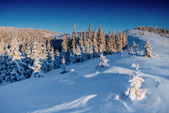 Magical winter snow covered tree.  Carpathian, Ukraine, Europe. Royalty Free Stock Photography