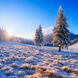 Magical winter snow covered tree. Carpathian, Ukraine, Europe stock image